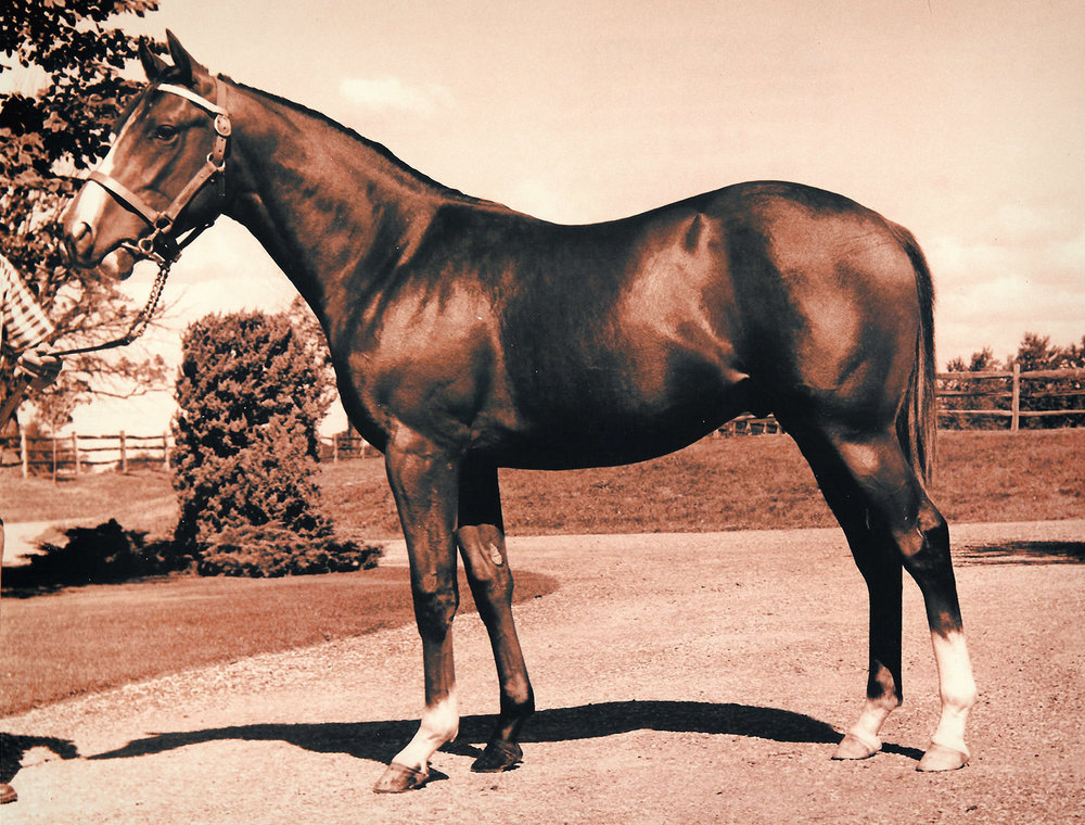 Northern Dancer as a Yearling / Horseracing Hall of Fame (p)