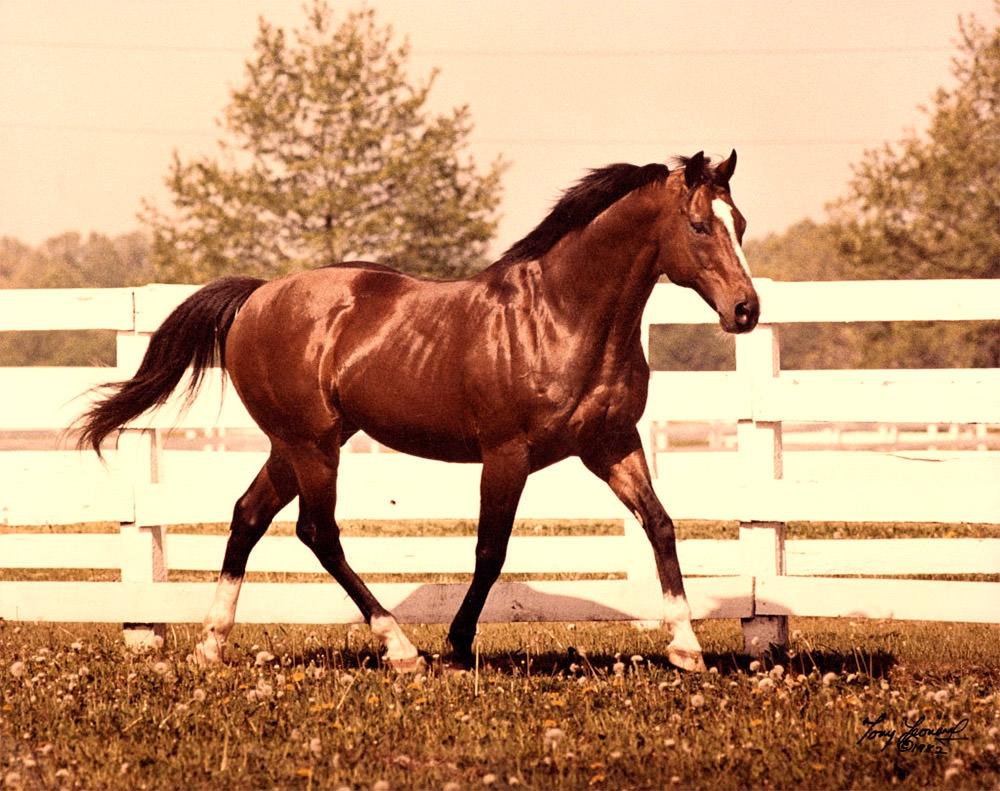 """Képtalálat a következőre: """"northern dancer horse"""""""