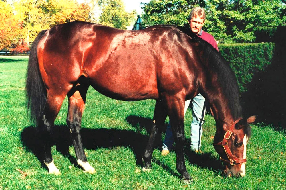 Nureyev (Northern Dancer) / Frances K Karon (p)