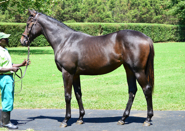 Lot 47 SWEET PRESERVE (Duke Of Marmalade X Surfers Eye)