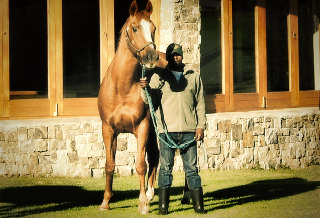 Senor Santa at Summerhill Stud