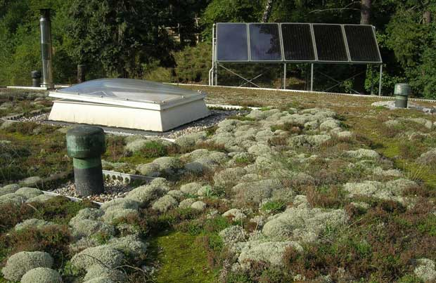17-lichen-and-moss-roof-okowerk-berlin-germany-photograph-courtesy-of-livingroofs.org.jpg