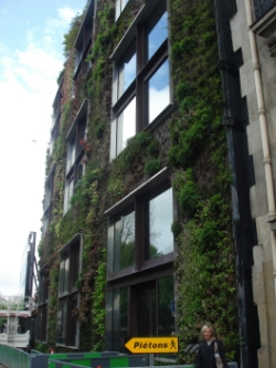 Quai Branley, Paris green wall photograph courtesy of Zoë Cooper
