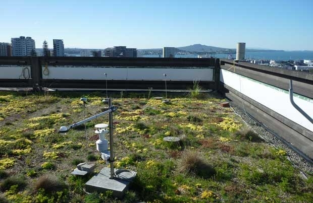 Auckland University green roof photograph courtesy of Zoë Cooper