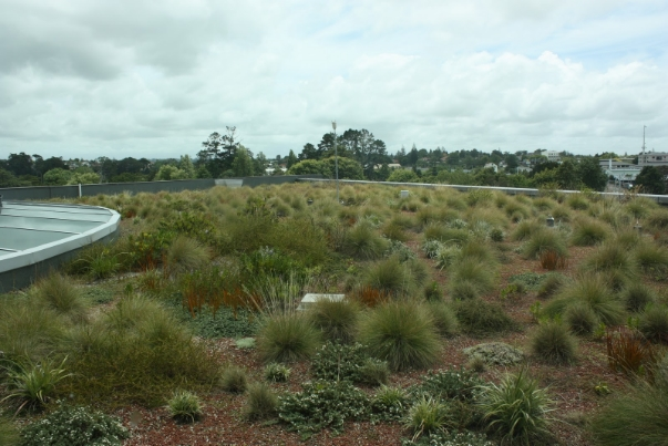 Waitakere Council green roof, Auckland