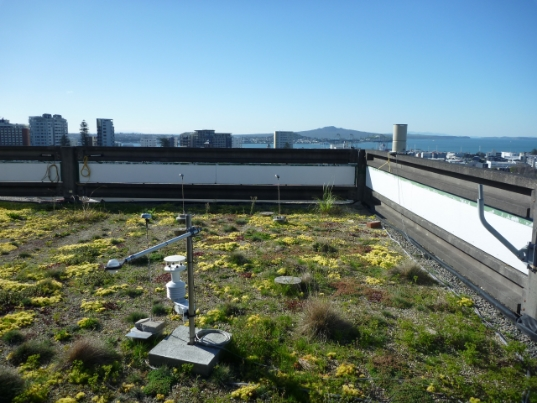 Auckland University green roof, photograph courtesy of Zoë Cooper