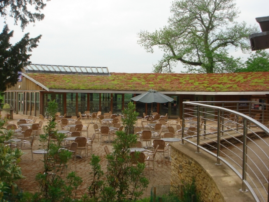 Cafe at Westonbirt National Arboretum, UK, photograph courtesy of Zoë Cooper