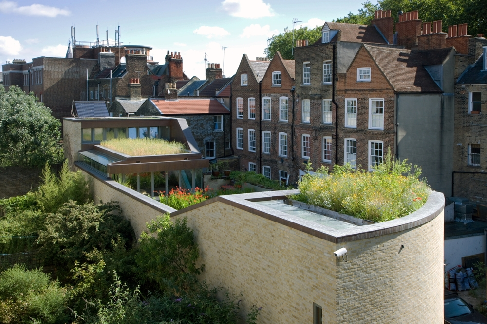 16 Bere House Islington, London, UK photograph courtesy of livingroofs.org.JPG