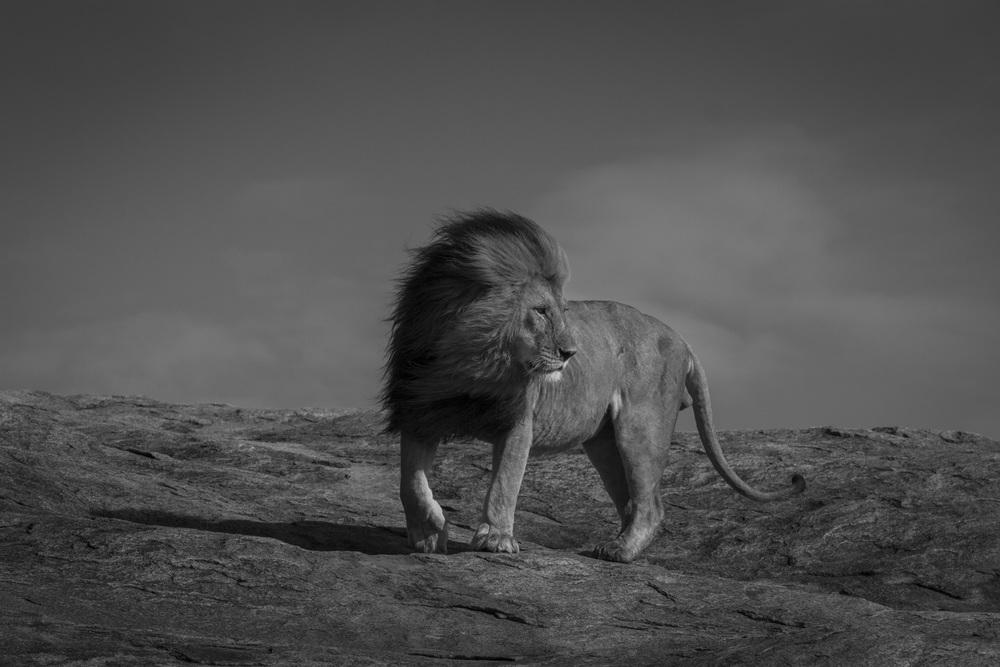 Lions-3624.jpg