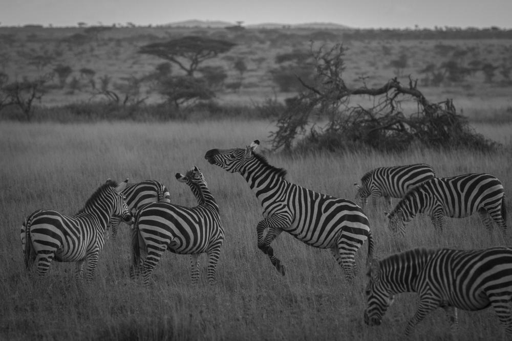 Serengeti N.P.