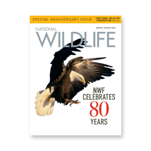 MAGAZINE REDESIGN National Wildlife bi-annual magazine