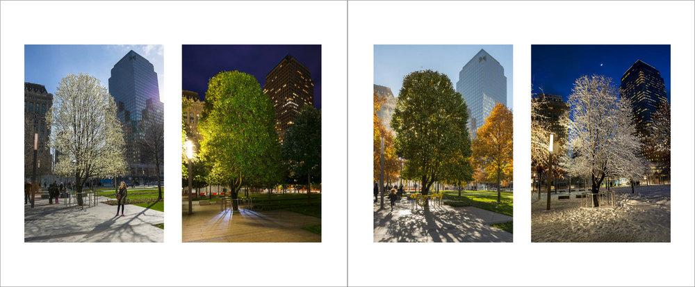 Trees_-20.jpg