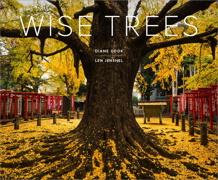 Trees_Covers-1.jpg