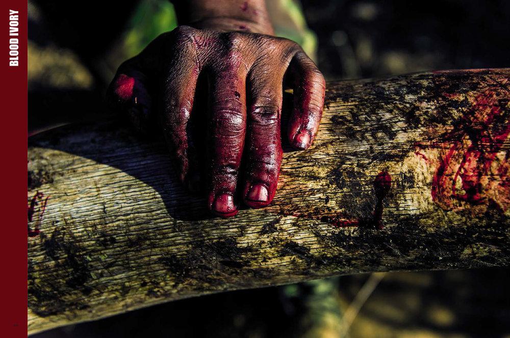 WC_Blood-ivory.jpg
