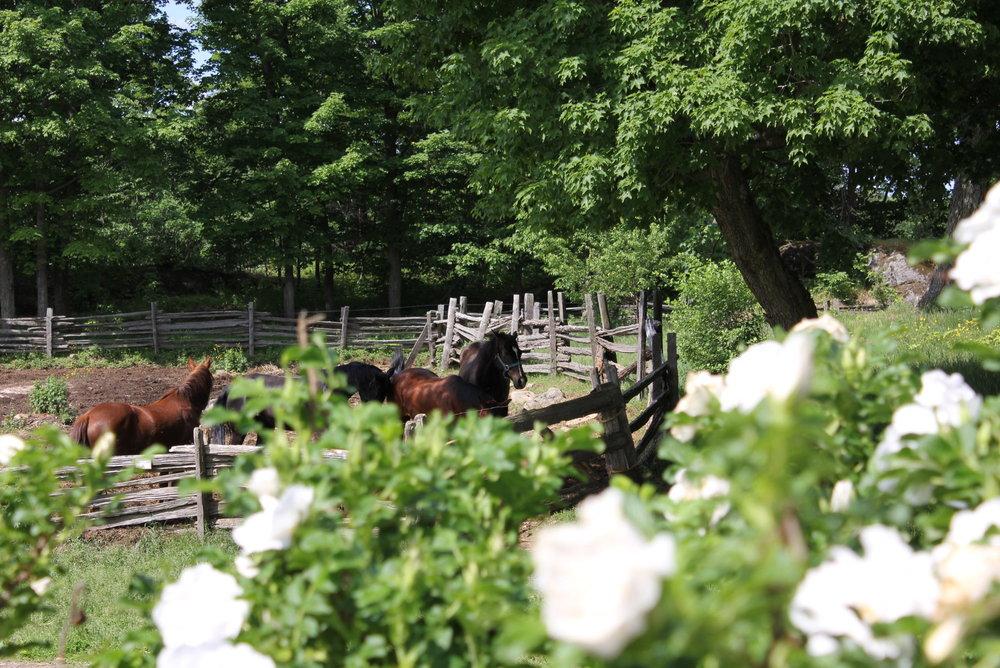 horseflowers.jpg