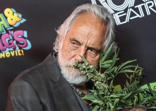 tommy chong band