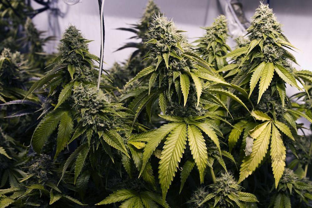 4th-cannabis-seed-logo.jpg