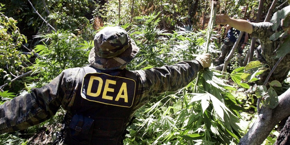 the-dea-is-getting-dragged-kicking-and-screaming-into-the-new-world-of-marijuana.jpg