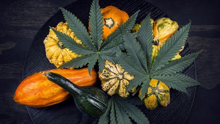 marijuana-thanksgiving-autumn-shutterstock.jpg