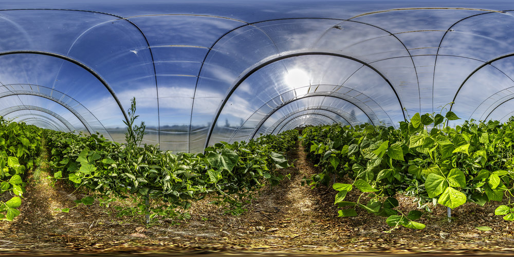 Panoramique équirectangulaire résultant de l'assemblage des quatre photos ci-dessous