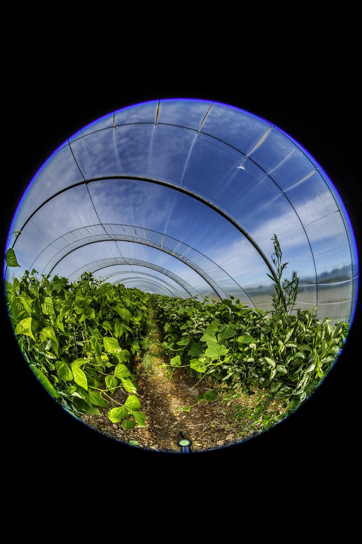 creer-une-visite-virtuelle.com_La cueillette du Gois_01.jpg
