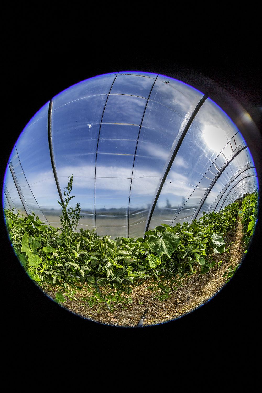 creer-une-visite-virtuelle.com_La cueillette du Gois_02.jpg