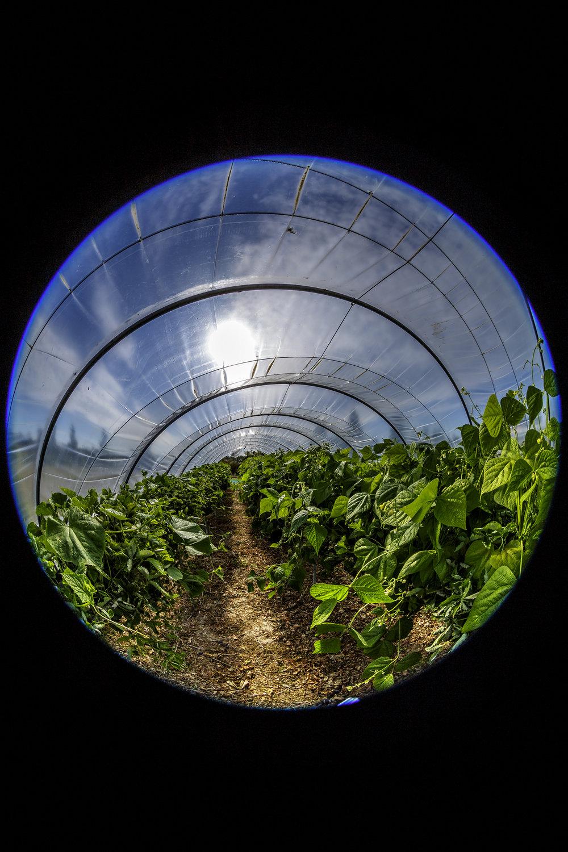 creer-une-visite-virtuelle.com_La cueillette du Gois_03.jpg
