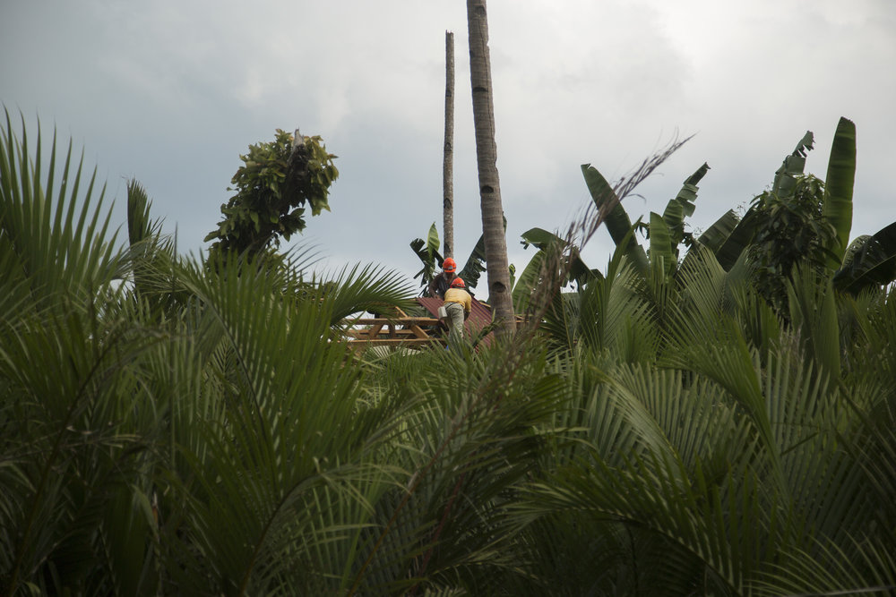 Houses are getting rebuilt using local palm trees, after typhoon Haiyan hit the Philippines and destroyed the livelihood of many palm tree farmers. It takes three years to grow new trees.
