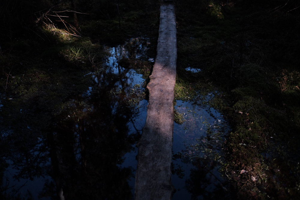 Nuuksio national park, Finland.