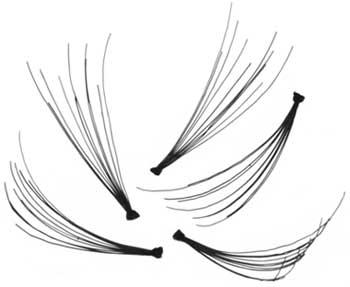 individual-lashes.jpg