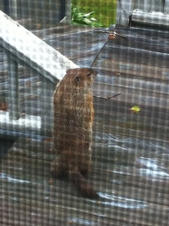 Tight_Groundhog