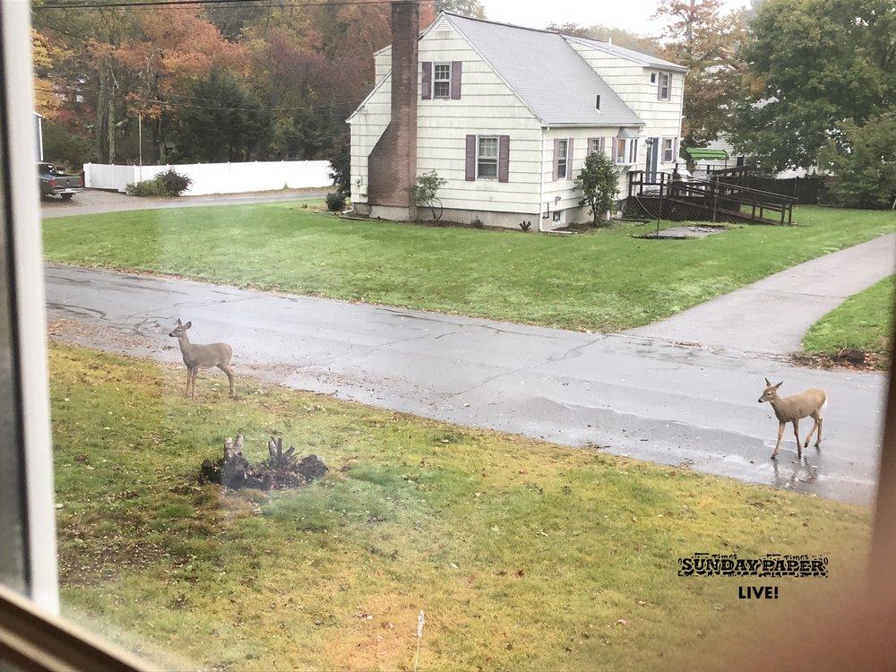 DeerSundayPaperLive.JPG