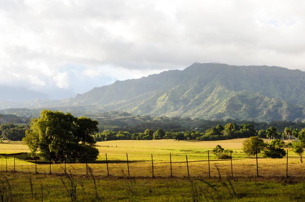 Kauai hillside 2.jpg