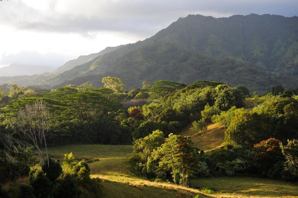 Kauai hillside.jpg