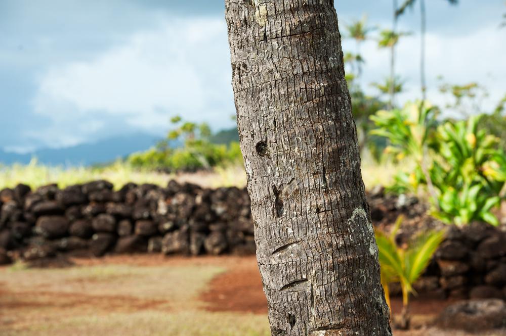 Palm bark.jpg