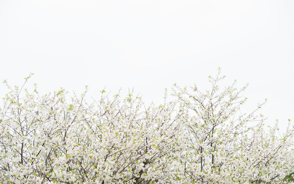 Spring 15 02.jpg