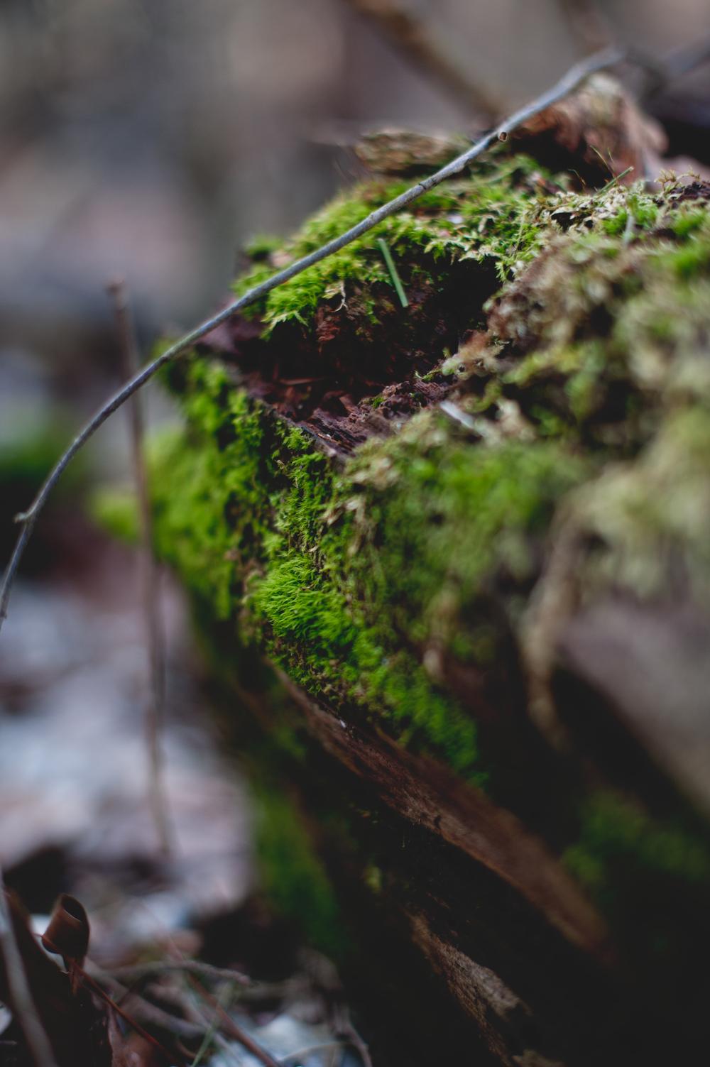 Moss 15.jpg