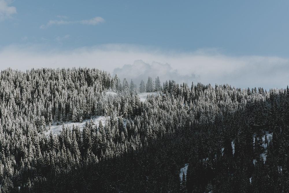 CO 71.jpg