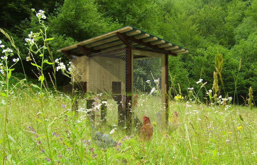 Coop-Rendering-in-Meadow.jpg
