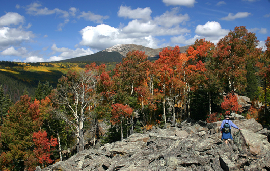 sf-fall-color.jpg