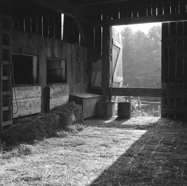 Horse barn sunlight