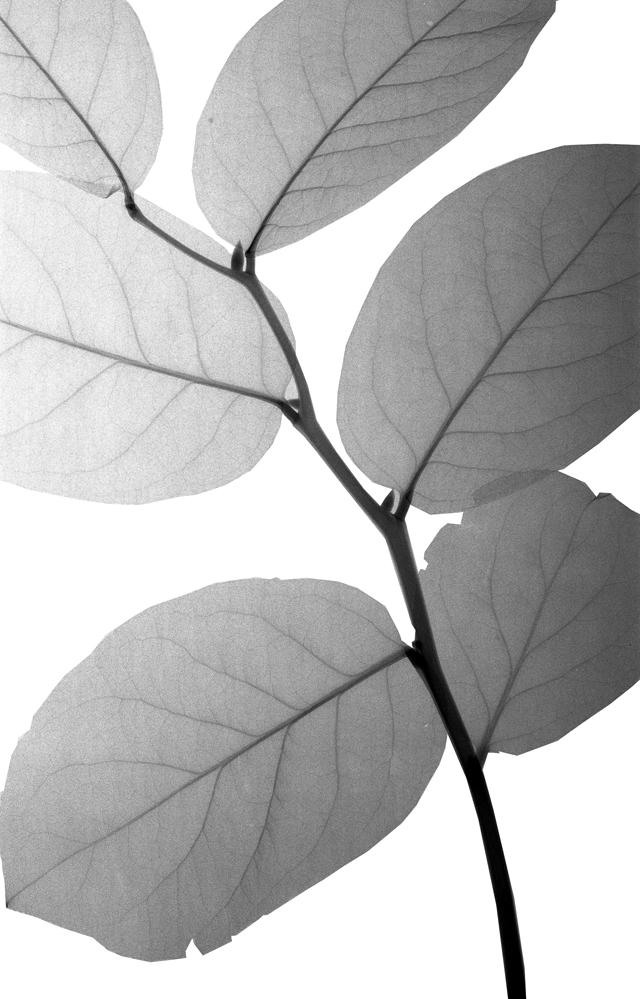 08 leaves.jpg