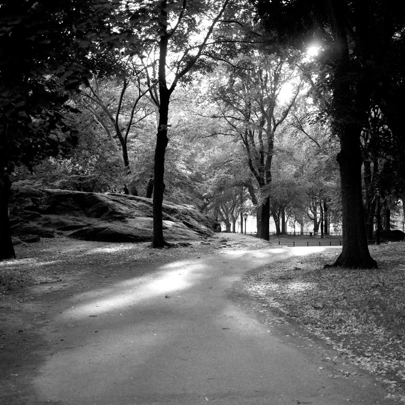 Central park dusk.jpg