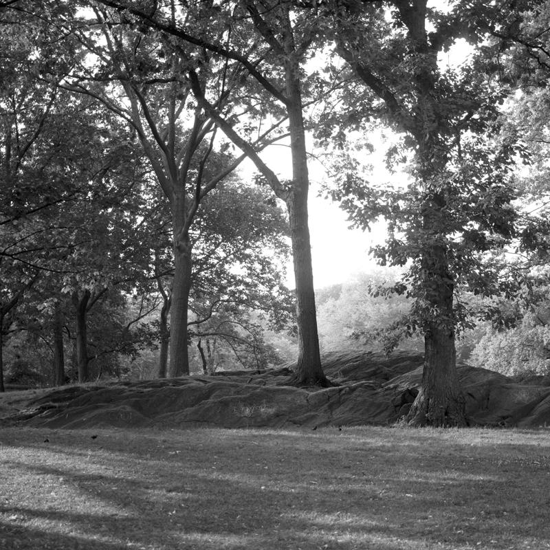 Central Park sunlit trees.jpg