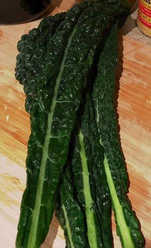 Insert Vibrant Kale