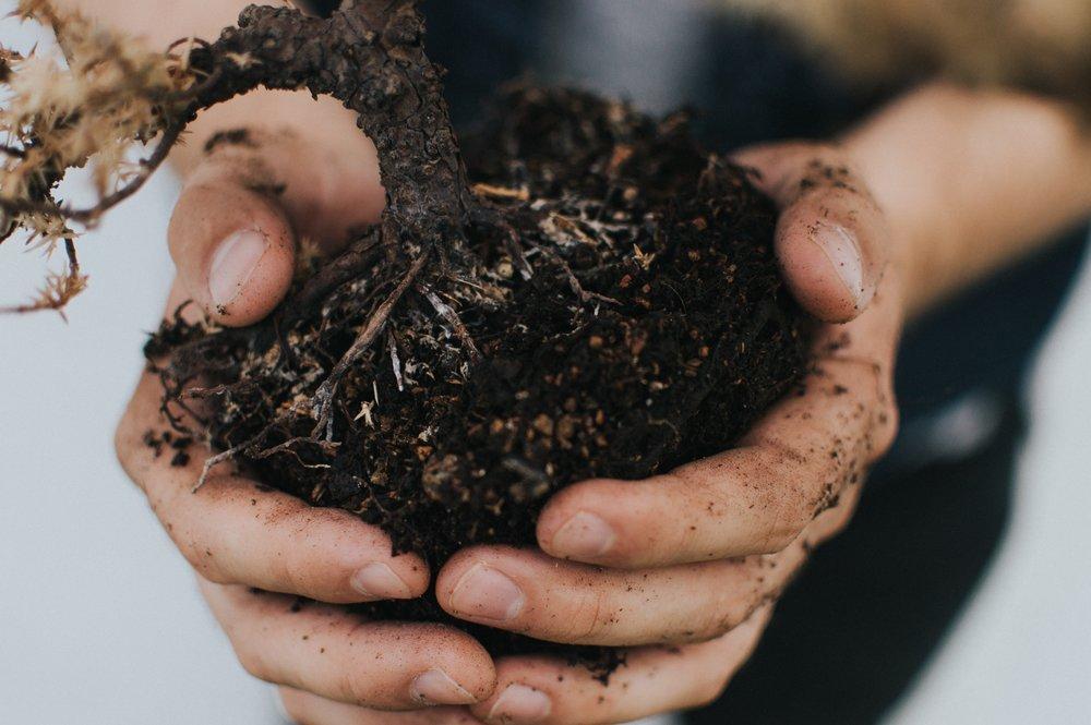 soil hands garden