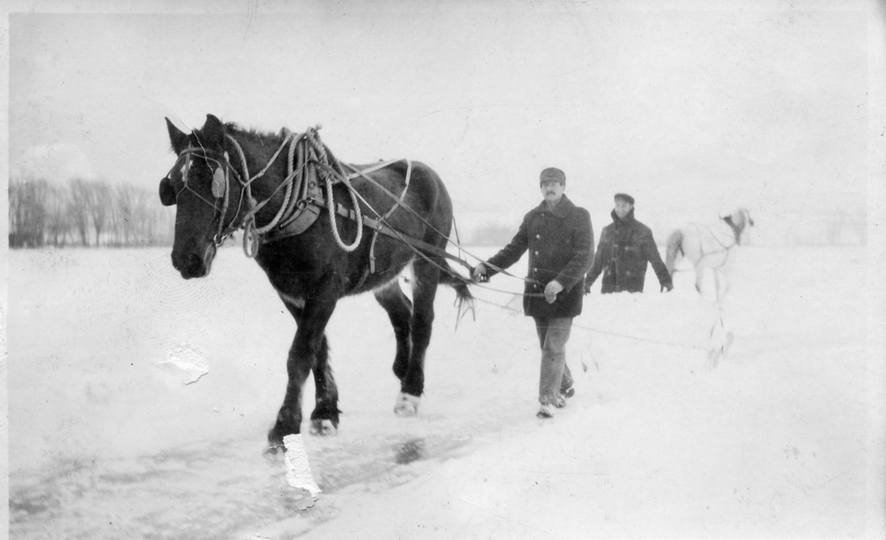 "Conesus Ice Harvest, 1915.Pictured: black horse- ""Duke"", Mark Colligan, Loyd Bates, and white horse."