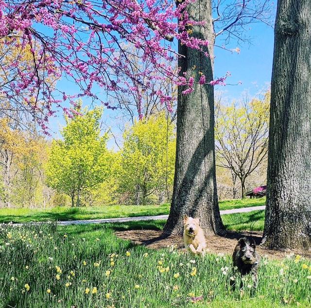 SpringDogsatGreatFrogs.jpg