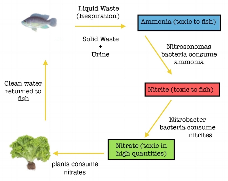 NITROGEN CYCLE image-page-0.jpg
