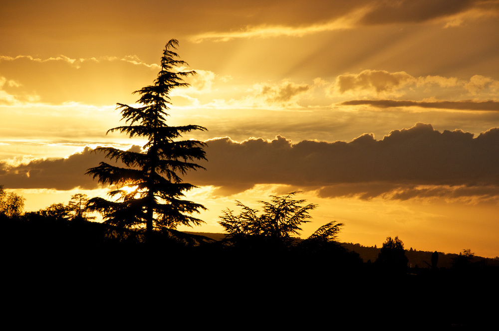 paris france arbre tree pine sapin sunset couche soleil rest.jpg